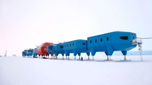 antarctic_walker