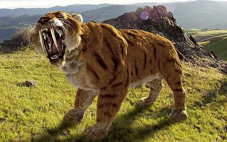 sabre-tooth-tiger-_1117360c