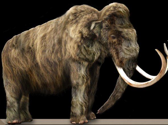 woolly-mammoth1