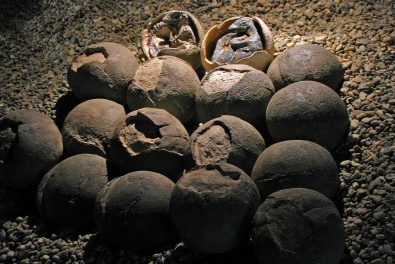 Dinosaur Eggs Found With Embryos Still Inside