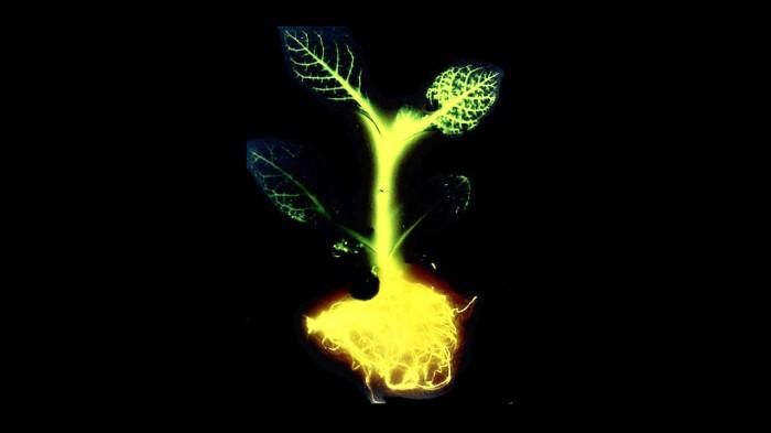 glowing_plants