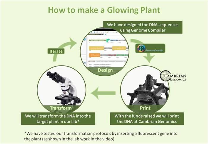 glowing_plants1