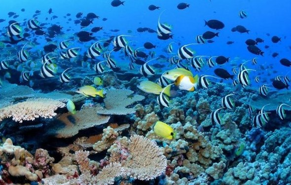 hawaii-coral-reef-600x404