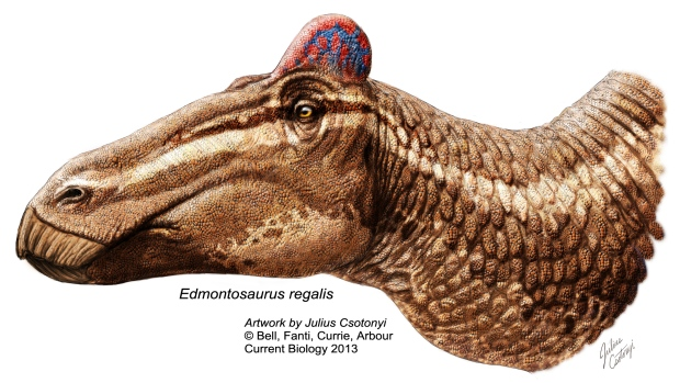 edmontosaurus-regalis