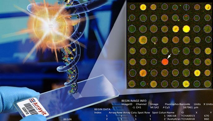 DNA-Microarray