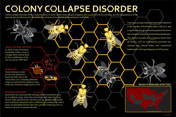 colony_collapse_disorder1