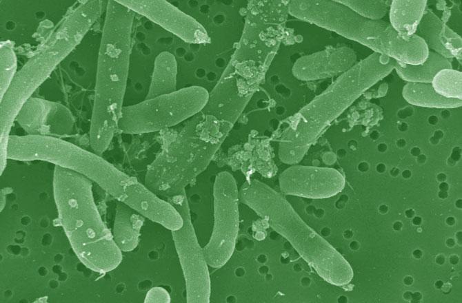 hacking-bacteria-fuel-ecoli-670
